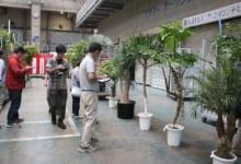 インドアプランツコンテスト 審査風景