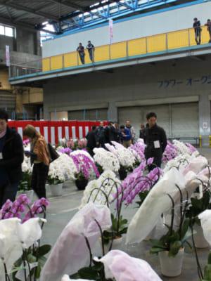 「平成29年度全国花き品評会洋らん部門」開催のご案内