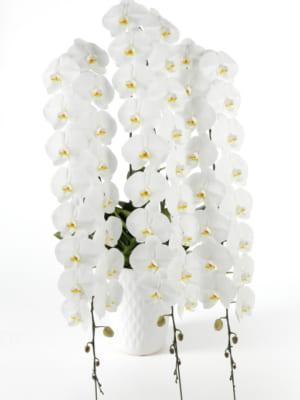 「平成29年度全国花き品評会 洋らん部門」が開催されました。