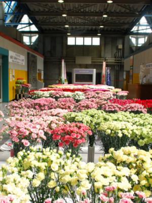 「全国花き品評会カーネーション部門」が開催されました