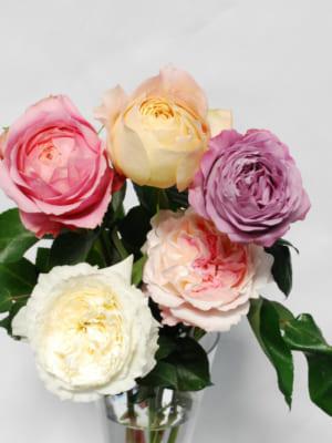 エターナルのバラ(イングリッシュ系バラ)