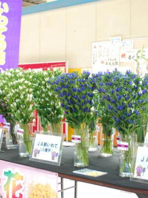 「いわての花」の展示をおこないました。