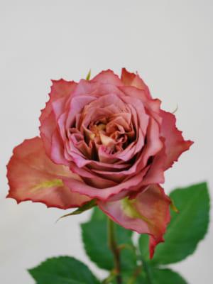 熊谷園芸のバラ