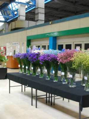 「北海道の花」中央通路展示を行いました