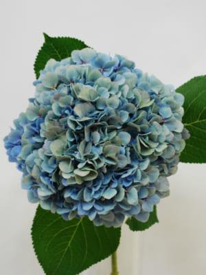 北海道の花