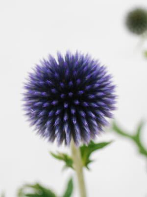 JA全農長野 信州の花